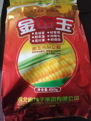 湖北省十堰市郧西县玉米种子