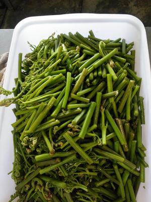 贵州省黔南布依族苗族自治州福泉市野生蕨菜