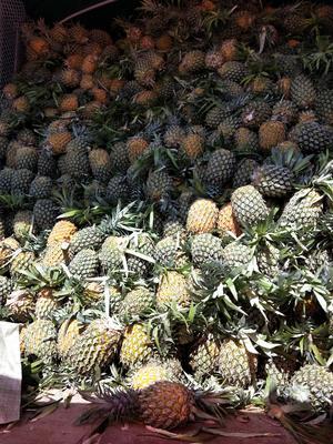 贵州省安顺市西秀区越南菠萝 1 - 1.5斤