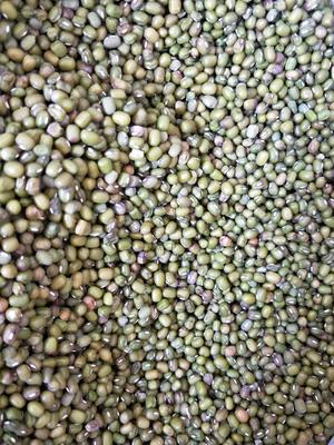 广西壮族自治区南宁市上林县毛绿豆 散装 1等品