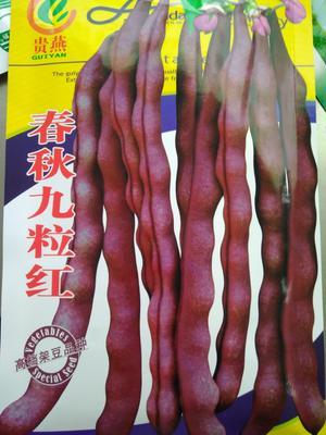 贵州省毕节市赫章县青豆种苗
