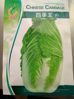 贵州省毕节市赫章县白菜种子 杂交种