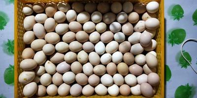 辽宁省锦州市黑山县柴鸡蛋 食用 礼盒装