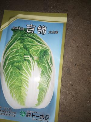 山东省临沂市兰陵县菊锦春白菜 6~10斤 毛菜