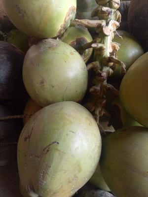 湖南省岳阳市临湘市椰子 6斤以上