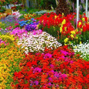 野花组合种子 野花组合种子
