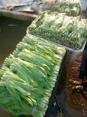 广西壮族自治区桂林市全州县青油麦 25~30cm以上