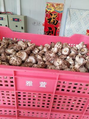 河南省三门峡市卢氏县花菇 4.6 - 6.0 cm 混级统货