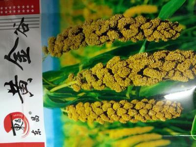 河北省石家庄市新华区其他粮油种子