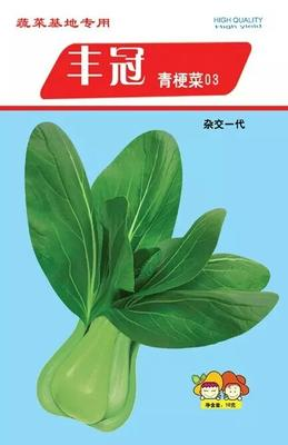 山东省潍坊市高密市青梗菜种子