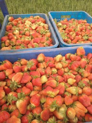这是一张关于达赛草莓 20克以上的产品图片