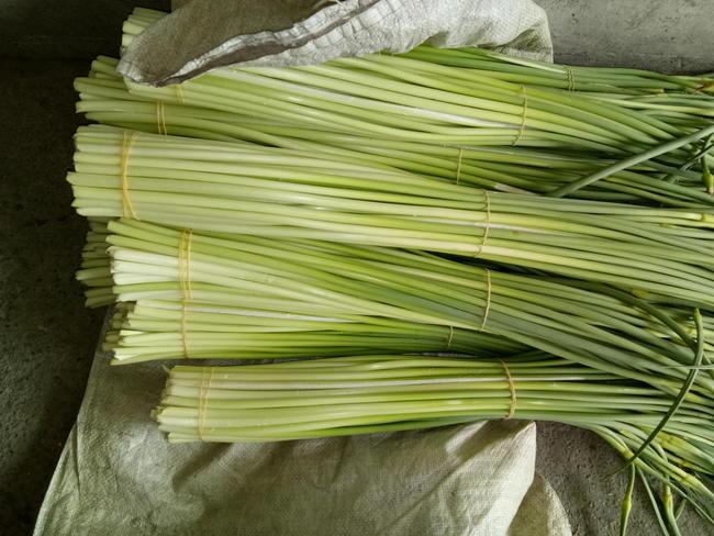 什邡蒜苔 一茬 60~70cm 通貨