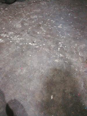 浙江省台州市黄岩区白花菜花 紧密 1~2斤 乳白色