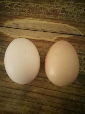 这是一张关于土鸡蛋 食用 散装的产品图片