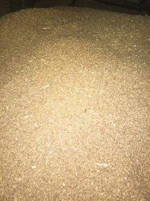 陕西省西安市阎良区混合小麦