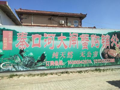 山东省滨州市沾化区河蟹苗