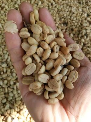 云南省怒江傈僳族自治州泸水县越南咖啡豆