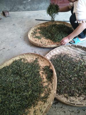 云南省普洱市镇沅彝族哈尼族拉祜族自治县普洱纯手工茶 散装 一级