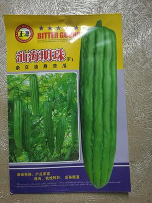 广东省河源市源城区汕海明珠苦瓜 25cm以上 2~4两