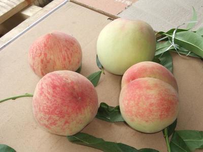 贵州省毕节市金沙县水蜜桃 45mm以上 3 - 4两