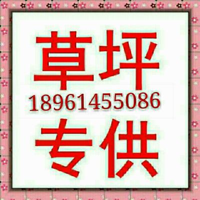 江苏省常州市武进区结缕草