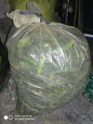 山东省潍坊市寿光市刺黄瓜 18cm以下 干花带刺