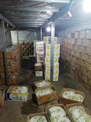 湖南省永州市宁远县27斤香蕉 八成熟 40斤以下