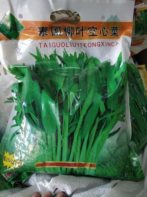 湖北省武汉市武昌区种子空心菜 15 ~ 20cm