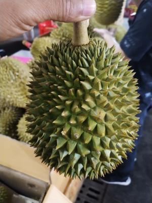 广西壮族自治区南宁市西乡塘区托曼尼榴莲 90%以上 1.5公斤