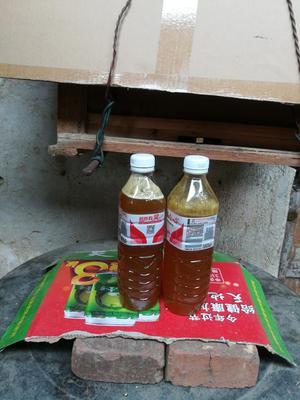 广西壮族自治区北海市合浦县荔枝蜜 散装 90%以上 2年