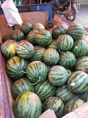 云南省普洱市江城哈尼族彝族自治县地雷西瓜 有籽 2茬 7成熟 10斤打底