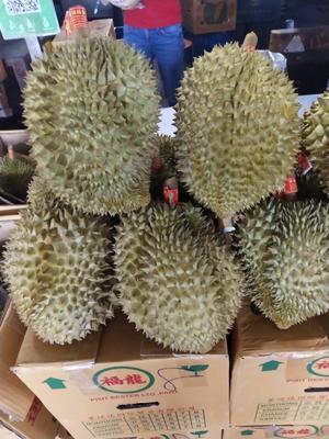 广西壮族自治区南宁市西乡塘区金枕头榴莲 90%以上 2 - 3公斤