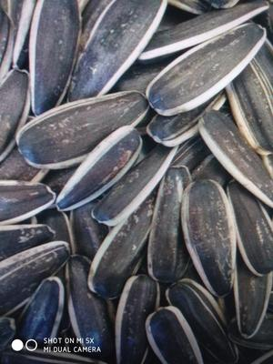 这是一张关于601葵瓜子 袋装的产品图片