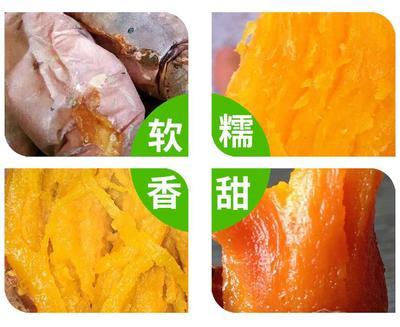 河南省驻马店市正阳县烟薯25 红皮 3两以上