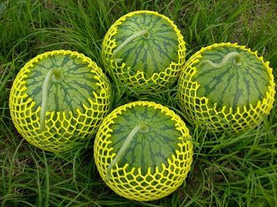 这是一张关于小兰西瓜 有籽 1茬 8成熟 3斤打底的产品图片