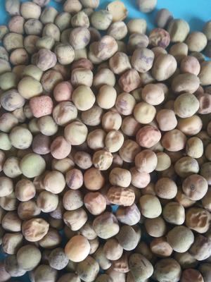 甘肃省定西市安定区干麻豌豆