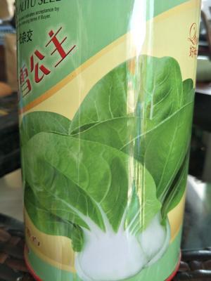 这是一张关于白菜种子 杂交种的产品图片