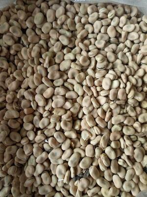 这是一张关于生干蚕豆的产品图片