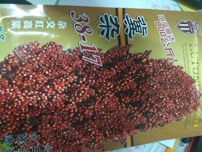 河北省石家庄市新华区红高粱种 种子