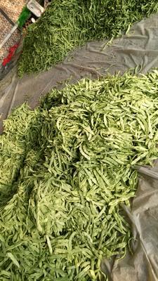 山东省聊城市阳谷县绿扁豆 1cm以上 10cm以上