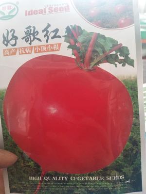 辽宁省沈阳市辽中县大红袍萝卜 2~2.5斤