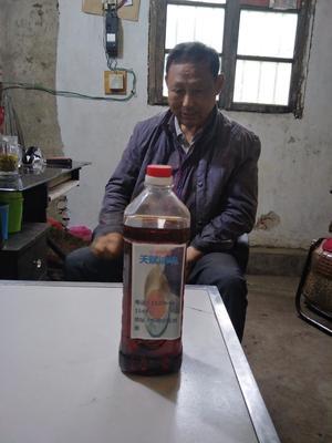 河南省信阳市新县小榨芝麻油