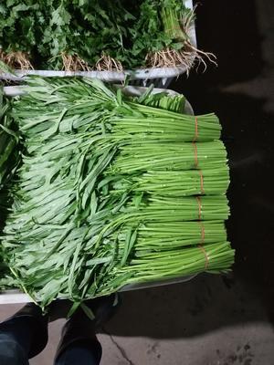 安徽省合肥市瑶海区竹叶空心菜 30 ~ 35cm