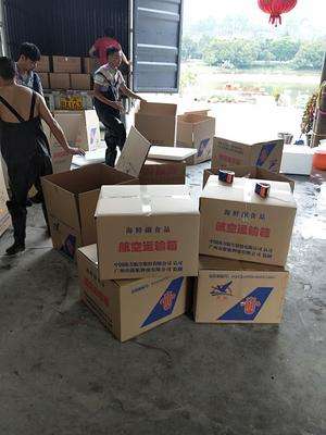 广东省广州市花都区鸭嘴鲟 人工殖养 0.5公斤以下