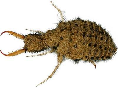 贵州省黔东南苗族侗族自治州凯里市蚂蚁