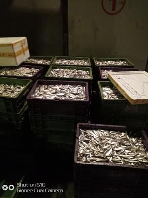 黑龙江省哈尔滨市宾县小银鱼 人工养殖
