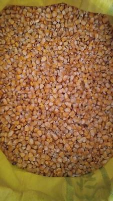 贵州省毕节市威宁彝族回族苗族自治县玉米干粮 霉变≤2% 杂质很少