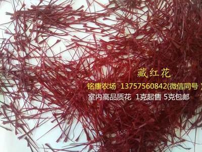 这是一张关于藏红花苗的产品图片