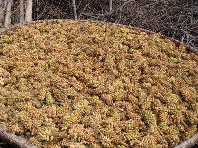 吉林省吉林市磐石市松花粉 24个月以上