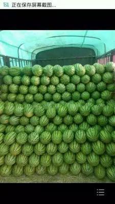 这是一张关于宁夏西瓜 有籽 2茬以上 7成熟 10斤打底的产品图片